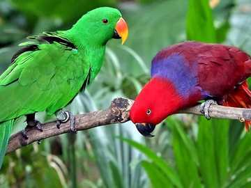 parrots .. - m ...................