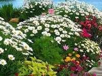 λουλουδόκηπος - λουλουδόκηπος .........................