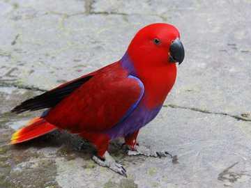Papagei.. - m ...........................