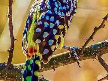 Natur gibt Schönheit - Natur gibt Schönheit ........................