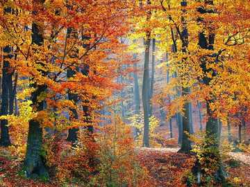 Fall entry in the forest