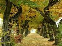 Het begin van de herfst in een laan met bomen - Het begin van de herfst in een laan met bomen