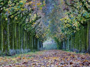 Alley of trees in autumn garb