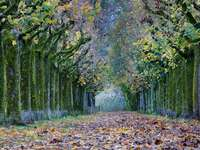 Alley of trees in autumn garb - Alley of trees in autumn garb