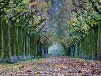 Baumallee im Herbstlichen Gewand - Baumallee im Herbstlichen Gewand