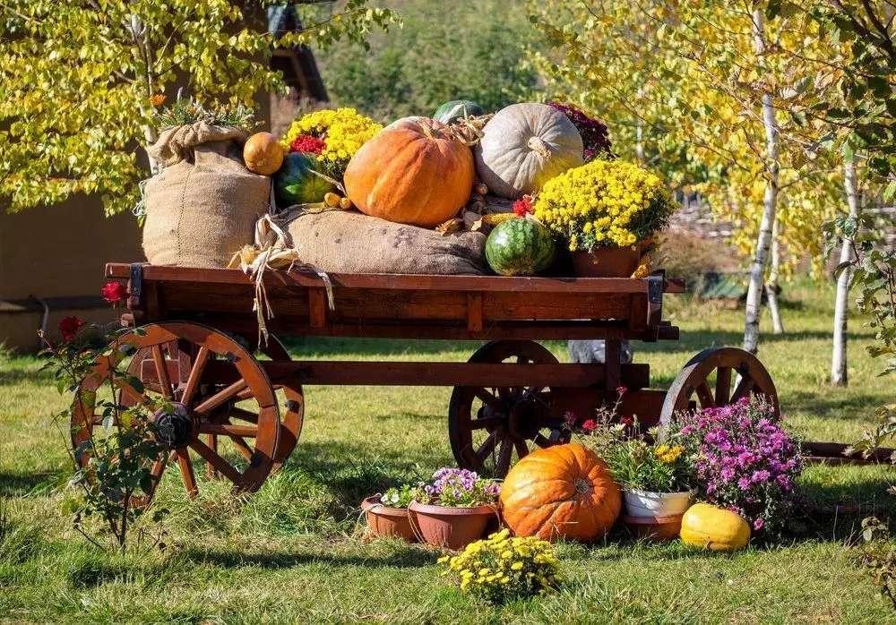 Есенна реколта в градината - Есенна реколта в градината