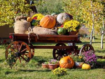 Autumn harvest in the garden - Autumn harvest in the garden