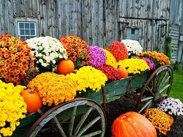 Autumn flowers and pumpkins in the cart - Autumn flowers and pumpkins in the cart