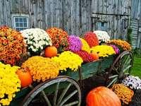 Őszi virágok és a sütőtök a kosárban