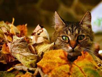 Katzenversteck im Herbstlaub - Katzenversteck im Herbstlaub