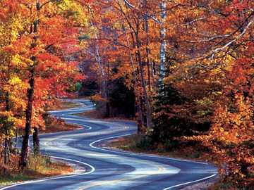 Drive through the autumn forest - Drive through the autumn forest