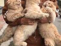 3 słodkie kotki