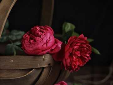 Rudá růže v košíčku - Tři rudé růže v košíčku