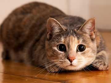 Mein Lieblingskätzchen - Dies ist eine fabelhafte Katze