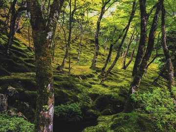 Perso nel bosco - alberi verdi accanto al fiume durante il giorno. Kyoto, Giappone