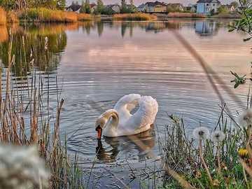 << Auf dem Teich >> - Landschaftspuzzle.