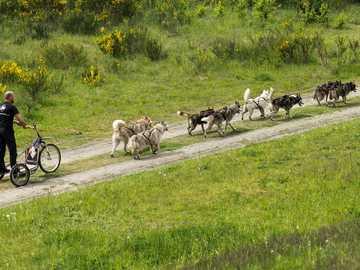 vehículo de trineo con perros - m .........................