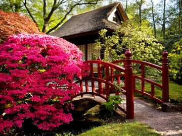 red bush in the Japanese garden - m ......................