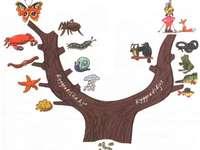 The family tree of the animals - The family tree of the animals, division of animals