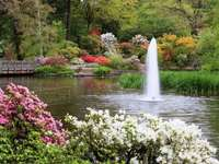 virágok a folyó mellett egy szökőkúttal
