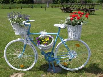 the bicycle is the pride of the garden - m .........................