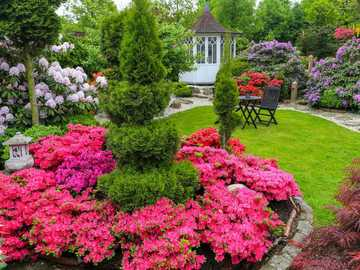 rhododendrons in the garden - m .........................