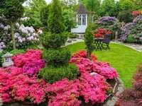 рододендрони в градината