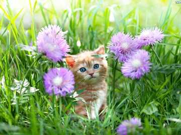 kitten among flowers - m ....................