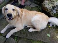 nagy fehér kutya