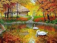 wiejski domek łabedzie staw jesien - wiejski domek łabedzie staw jesien