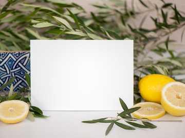 Mediterraneo. Modello - limone giallo su carta bianca.