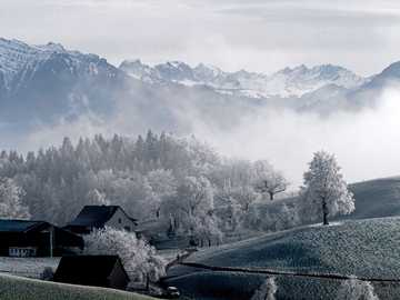 White trees - trees beside snow capped mountain during daytime. Hirzel, Suiza