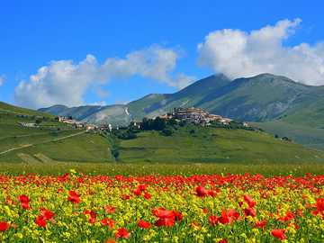 meadow in the poppies in the Italian mountains - m ....................