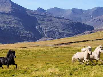 galloping horses in the mountains - m ....................