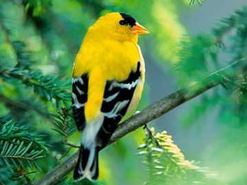 uccello giallo - m ....................