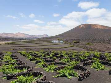 Weinberg. - grüne Wiese nahe Berg unter weißen Wolken während des Tages. Lanzarote, Spanje