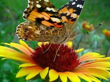 a butterfly on a flower - m ....................