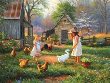 pollame domestico - m .....................