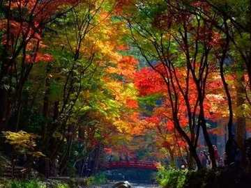 Colorful autumn trees by the stream - Colorful autumn trees by the stream