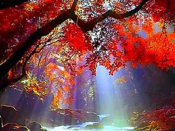 Colorful play of light in autumn - Colorful play of light in autumn