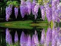 Paisaje del parque con flores de color púrpura.