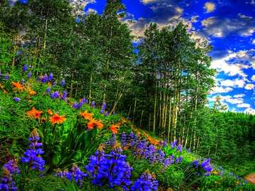 Flowers by the forest and the roadside - Flowers by the forest and the roadside