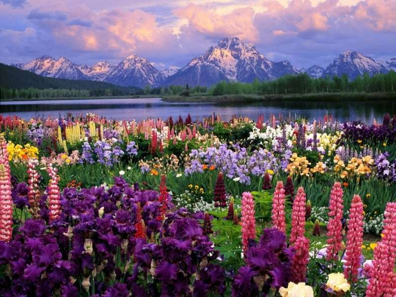Abundance of flowers in front of the lake and mountains - Abundance of flowers in front of the lake and mountains
