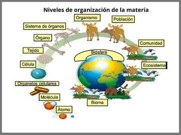 organisacion de la materia - los diferentes niveles de organizationación de la materia