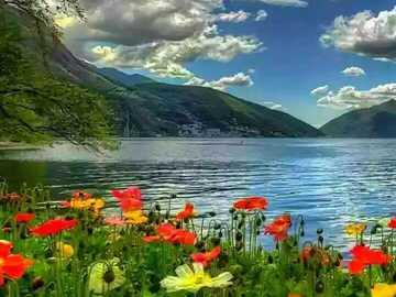Prairie fleurie au bord du lac avec des montagnes - Prairie fleurie au bord du lac avec des montagnes