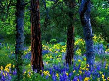 Fleurs dans les clairières - Fleurs dans les clairières