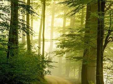 Marcher dans les bois - Marcher dans la forêt claire