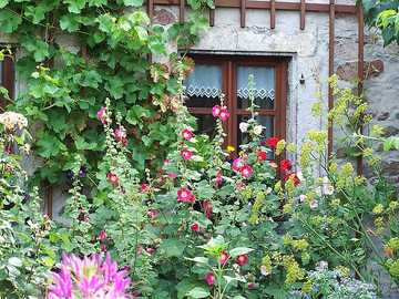 Cottage garden in front of an old stone house - Cottage garden in front of an old stone house