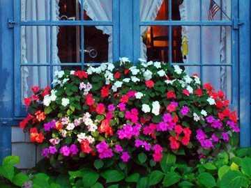 Blue window with flowers - Blue window with flowers