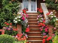 Αφθονία λουλουδιών μπροστά από το σπίτι - Αφθονία λουλουδιών μπροστά από το σπίτι